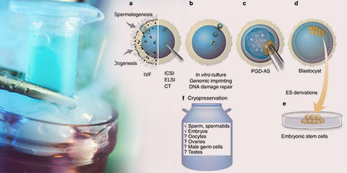 embryo-cryopreservation