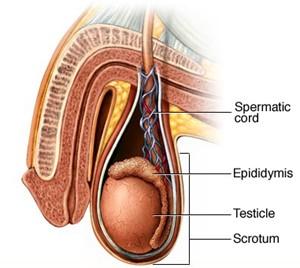 Testicular-sperm-aspiration